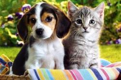 Шерсть домашних животных - причина аллергии