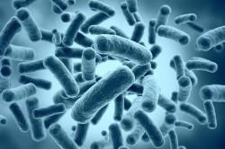 Бактерии - причина развития синусита