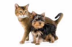 Аллергия на шерсть животных - причина сильного насморка