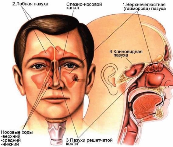 симптомами аллергии является